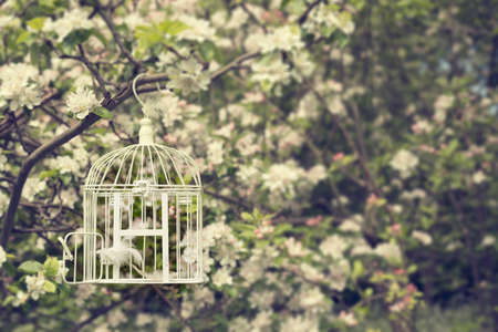 Open birdcage with feathers in tree with apple blossom photo