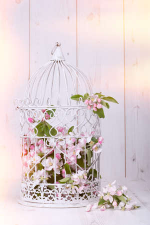 Apple blossom filled antique birdcage on wooden background Stock Photo