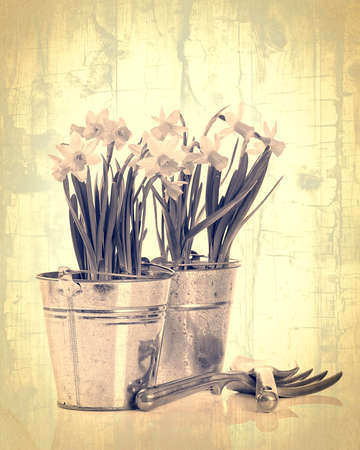 Daffodils in pots with garden tools - vintage crackle effect photo