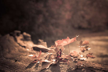soft diffused light: Autumn leaves on rustic fallen log with shallow dof