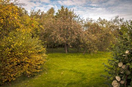 established: Old established apple orchard in late summer Stock Photo
