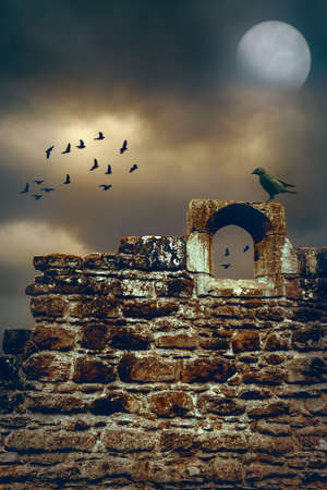 Jackdaw sitting on the wall of a ruined abbey photo