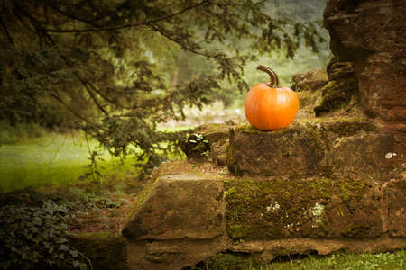 Pumpkin sitting on the wall of an ancient ruined abbey