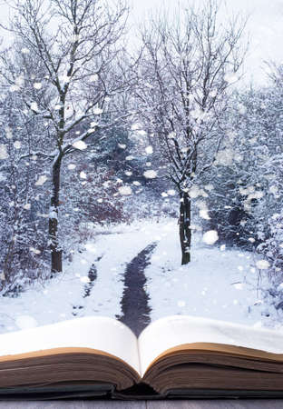 Open book with winter woodland background and falling snow photo
