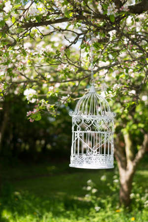 Empty birdcage in apple blossom tree in spring photo