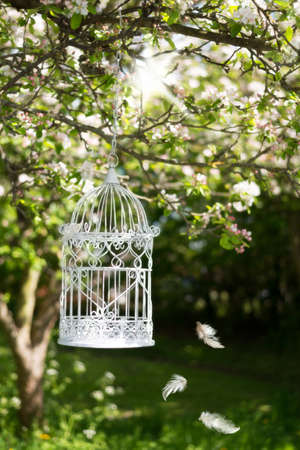 Vintage birdcage hanging from an apple blossom tree in spring with floating feathers photo