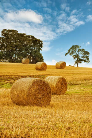 Hay bales in field with summer sky photo