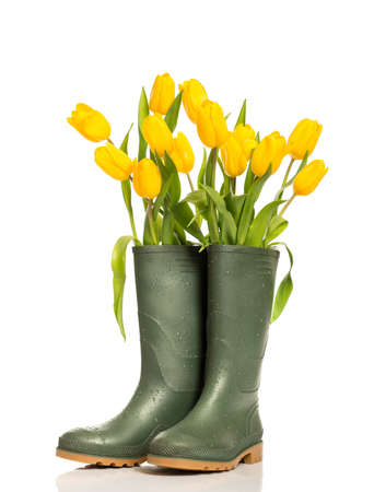 Spring tulip flowers in wellington boots on a white background Foto de archivo