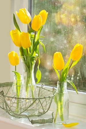 gotas de agua: Tulipanes de primavera en las botellas de cristal que se sientan en el alféizar de la ventana con gotas de lluvia Foto de archivo