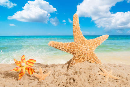 Starfish on the beach with windmill photo