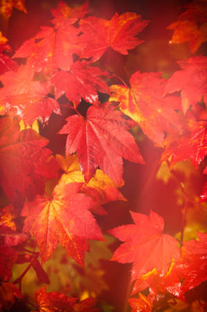 wood turning: Autumn at Westonbirt Arboretum - abstract leaf design