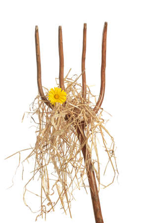 prongs: Pitch fork loaded with straw and a single yellow daisy Stock Photo