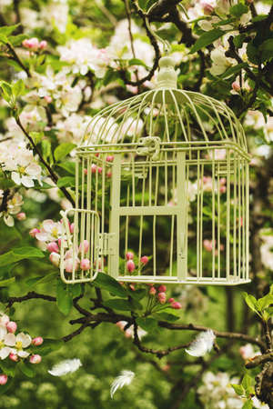 amongst: Birdcage hanging amongst apple blossom in orchard with floating feathers