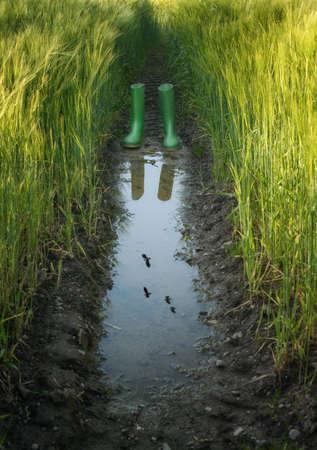 vogelspuren: Gummistiefel in einer Pfütze spiegelt sich im wachsenden Weizenfeld