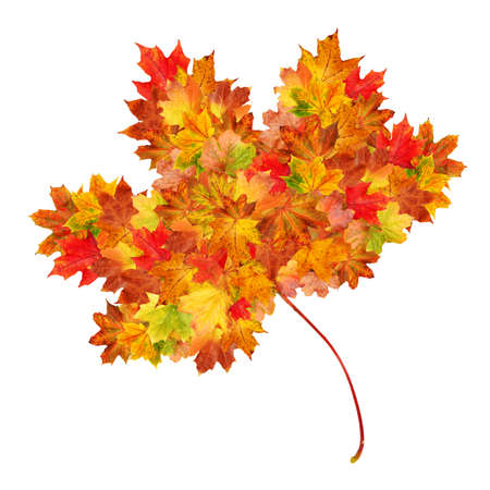 leaf shape: Autumn leaf shape made up of smaller autumn leaves on a white background