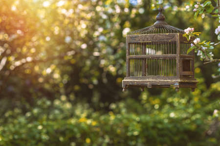 edwardian: Antique Edwardian birdcage in spring blossom Stock Photo