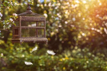 pluma: Birdcage eduardiano antigüedades en flor con plumas flotantes