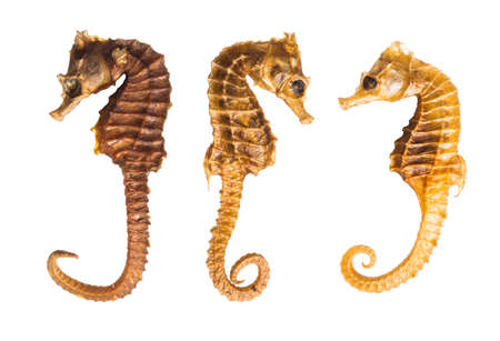 Seahorse specimens isolated on a white background