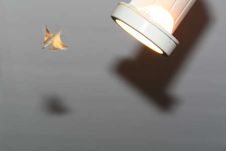 repellant: Moth flying toward light, casting shadows Stock Photo