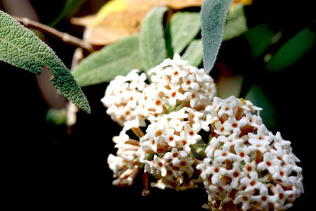 Tiny blossoms on a tree Stock Photo - 5538380
