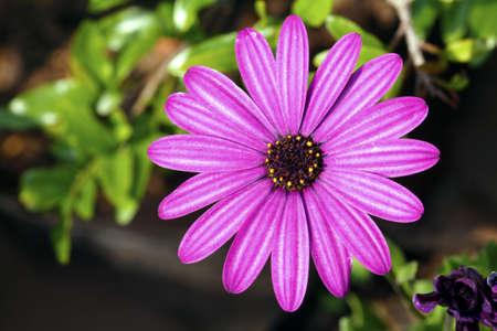 Beautiful purple flower photo