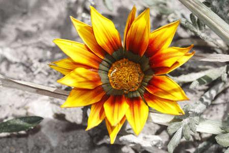 Striking bright yellow flower Stock Photo - 5572628