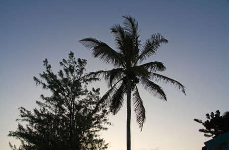 Palm Tree in sunset Stock Photo