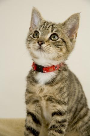 Cute wided eyed kitten