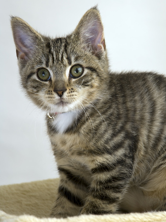 Cute young cat looking worried Stock Photo