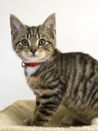 Cute young cat staring wide eyed at the camera Stock Photo