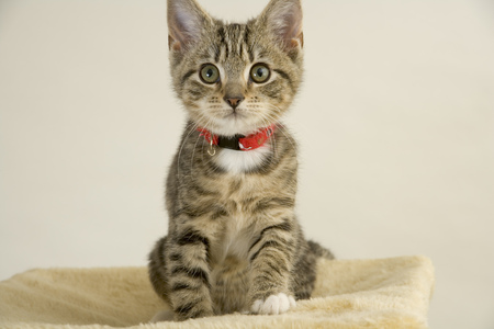 Cute wided eyed kitten looking at the camera Stock Photo