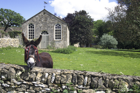 A donkey looks enquiringly over a cotswold stone wall in front of an old chapel building at Duntisbourne Abbotts, Gloucestershire, UK 写真素材