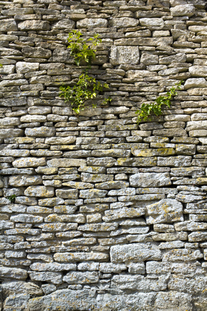 Old rubble stone wall with vegetation growing on it 写真素材 - 101506542
