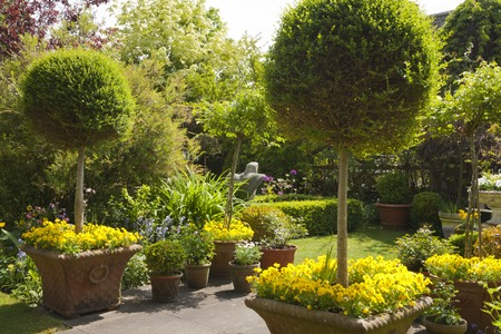 Small densely planted summer garden with shrubs and colour Reklamní fotografie