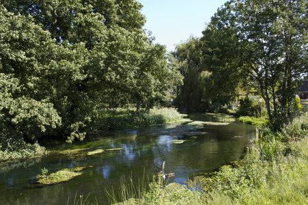 Ampney Brook in summer sunshine, an idyllic stream in The Cotswolds near Cirencester, Gloucestershire