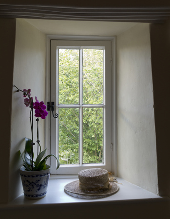 Looking out through an old window to woodland. An orchid and hat are on the window ledge.