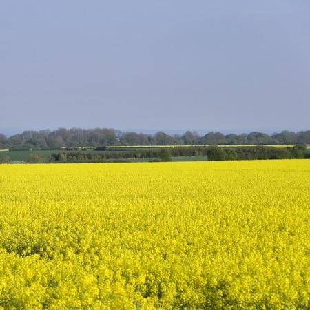 Simple colouful agriculture landscape