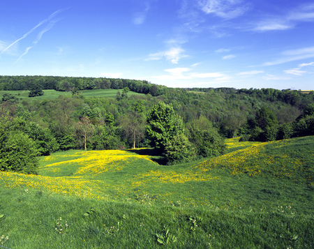 Simple field and tree summer landscape, buttercups Stock Photo
