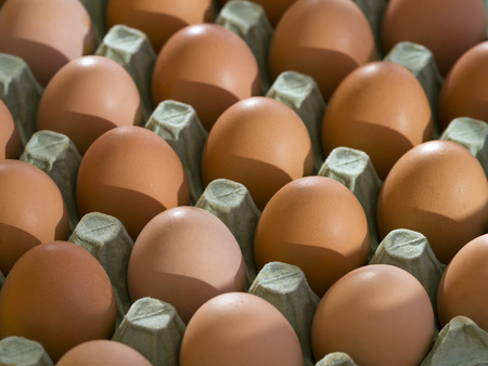 A tray of fresh free range eggs in morning sunlight. Shallow depth of field.