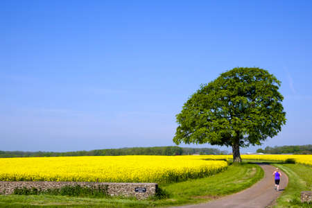 Calcot, Gloucestershire, UK - 23rd May 2012: A woman running along a a country lane surrounded by oil seed rape fields Redakční
