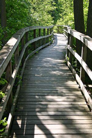 boardwalk trail: A curved boardwalk hiking trail through the woods