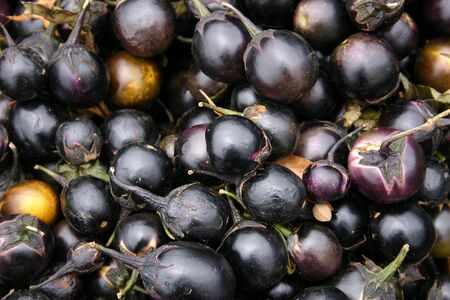 A large group of pretty Indian Eggplant Stock Photo - 3719429