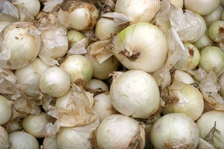 A large group of fresh white onions Stock Photo - 3719428