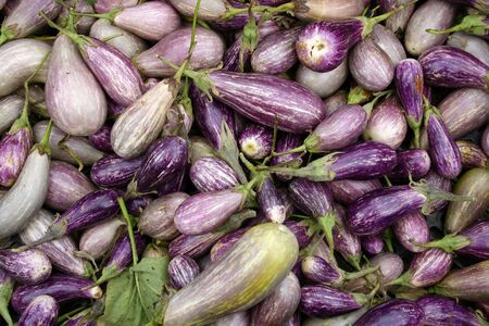 A large group of colorful Zebra Eggplant Stock Photo - 3719440