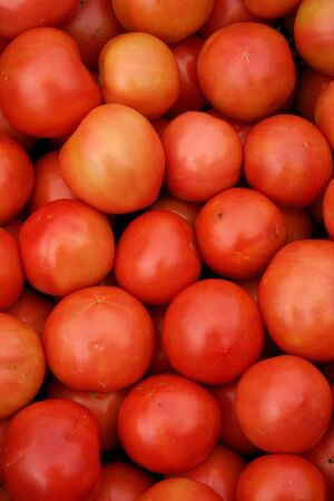 A large group of beautiful red tomatoes Stock Photo - 3719418