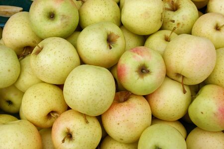 A large group of golden delicious apples Stock Photo - 3719420