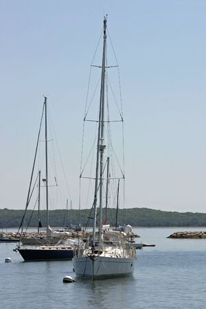 Several sailboats in a harbor on a sunny day photo