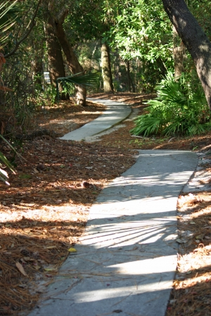 wooded path: A path through a thick wooded area with sunlight