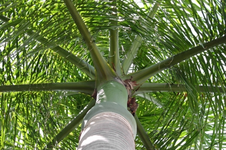 A pretty palm tree taken from a low angle photo