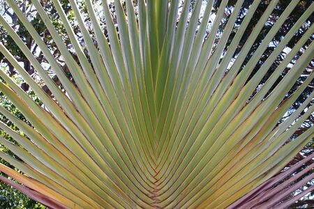 A very geometric Palm Frond in the sun Stock Photo - 19290719